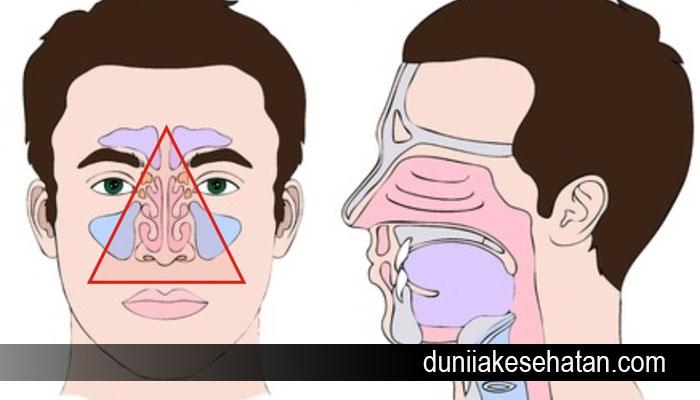 bahaya mencabut bulu hidung