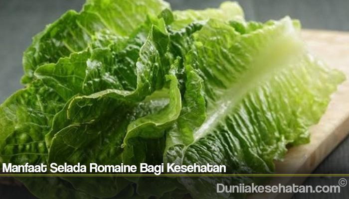 Manfaat Selada Romaine Bagi Kesehatan