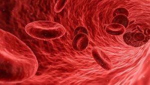 Jenis Penyakit pada Sistem Peredaran Darah